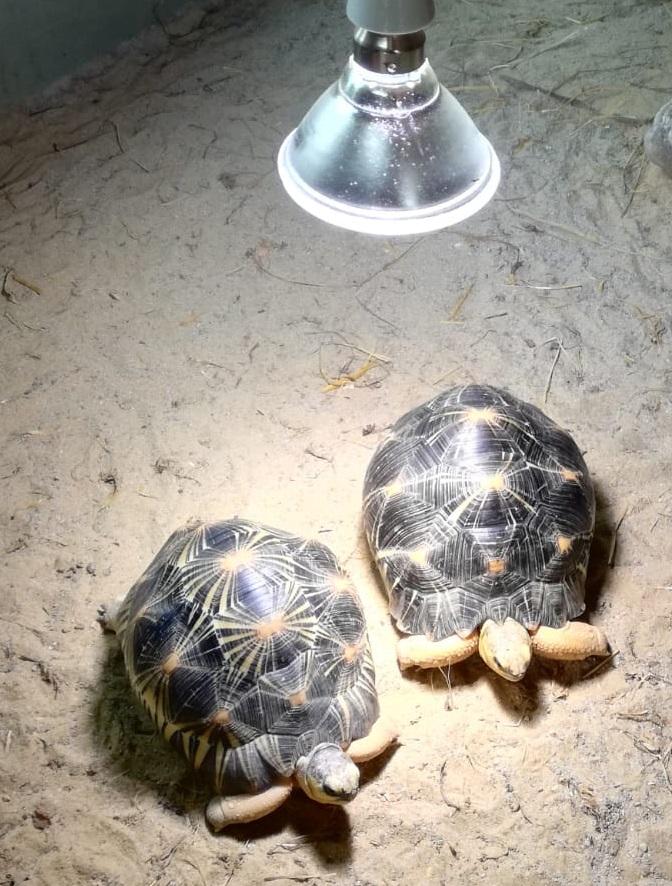 Reptiles Tipps für Experten - heute UV-Licht und Temperatur