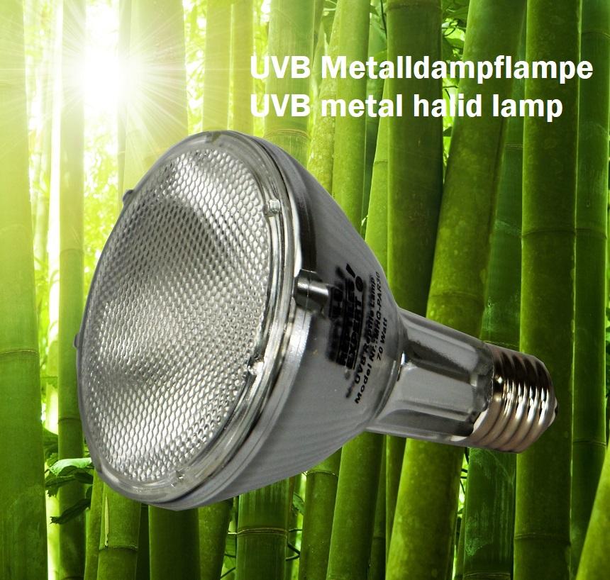 5 Gründe warum UVB-Metalldampflampen ideal für Reptilien im Terrarium sind