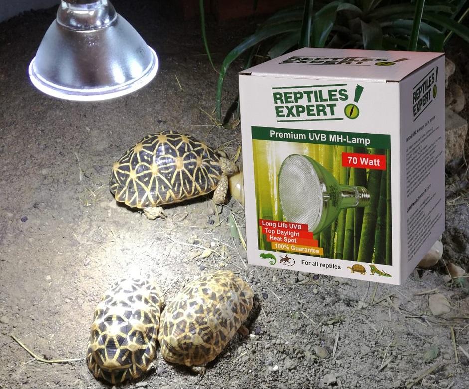 Wie wähle ich die richtige UVB Lampe für meine Reptilien?
