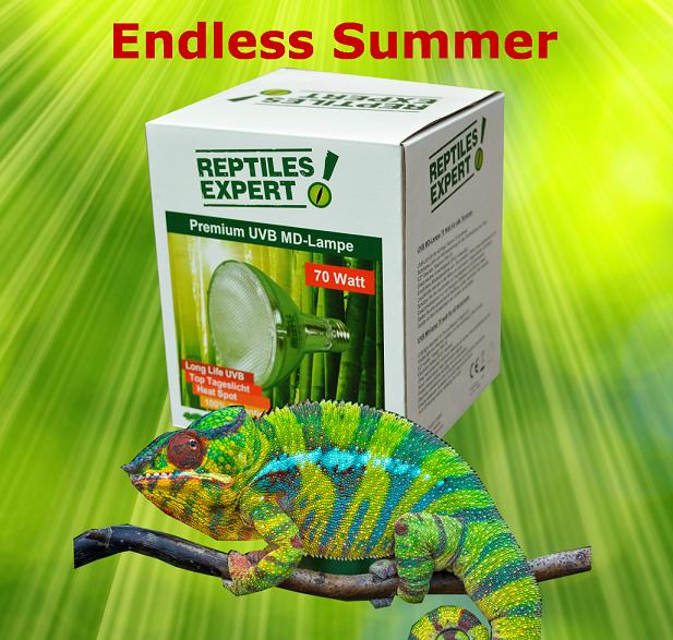 Reptiles Tipps - Chamäleons
